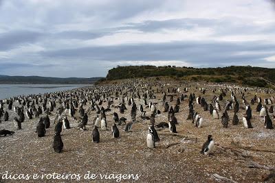 Pinguinera Isla Martillo