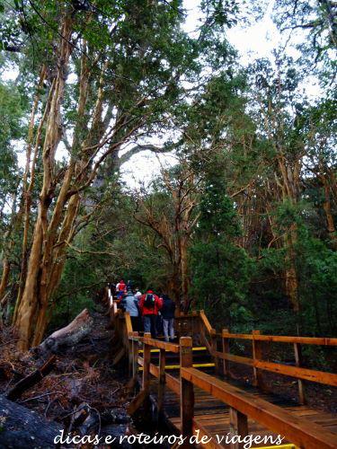 Bosque de Arrayanes 04