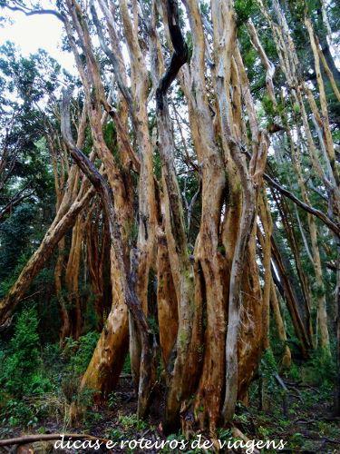 Bosque de Arrayanes 05