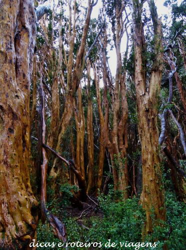 Bosque de Arrayanes 06