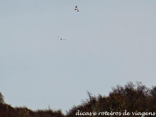 Cerro Tronador 21