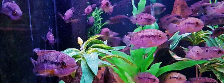 Aquario de Bonito