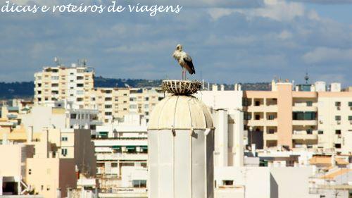Faro 16