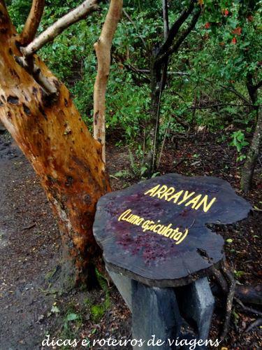 Bosque de Arrayanes 03