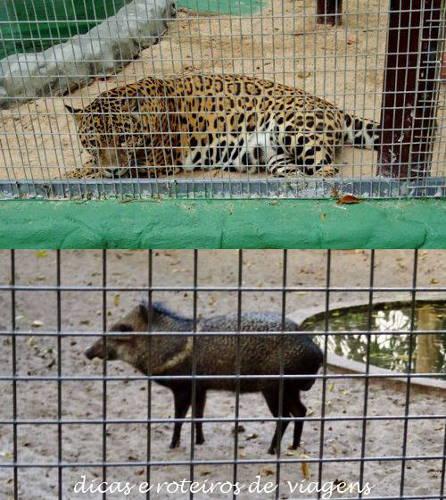 Hotel Zoo 02