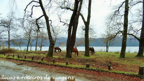 San Martin de los Andes 17
