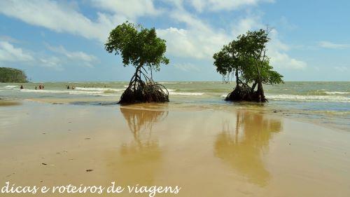 Ilha do Marajó 01